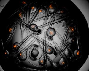 Concurso-Investigarte---Constelación-Celular